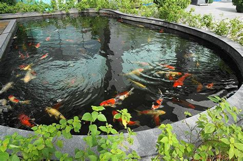 How do Fish Survive at the Bottom of a Pond? Information