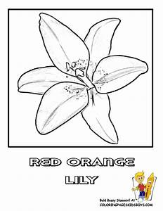 Luxurious Coloring Flower Picture | Lily | Free | Flower ...