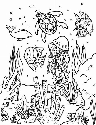 Coloring Ocean Pages Printable Fish Adult Animal
