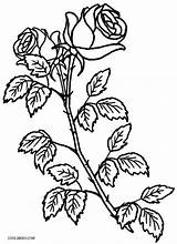 Coloring Rose Pages Roses Plant Printable Bush Flower Drawing Skull Cool2bkids Colouring Adult Getcolorings Visit Getdrawings sketch template