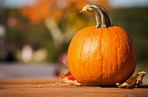 Pumpkins, Growing, Carving, And, Cooking, U2013, A, Guest, Blog, From, The, Two, Thirsty, Gardeners