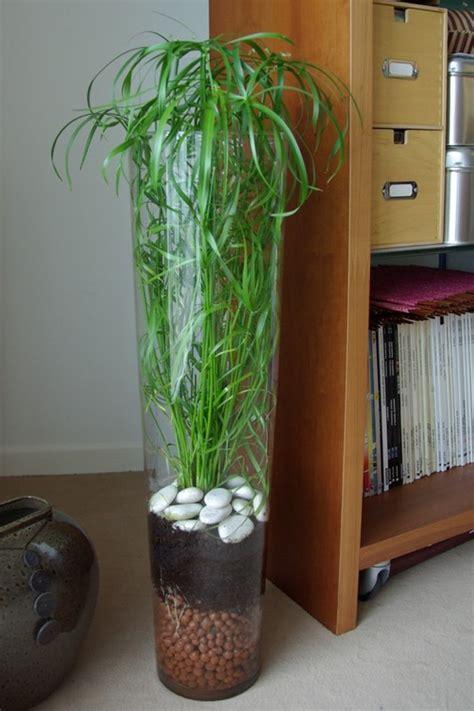 entretenir un azalee d interieur une plante verte facile 224 vivre mon billet d humeur en couleurs