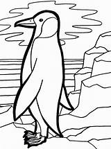 Penguin Coloring Emperor Pages Penguins Colouring Drawings Popular Calendar Tulamama Easy Template sketch template