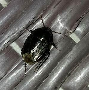 Kleine Käfer Im Zimmer : kleine schwarze k fer hab im zimmer kleine schwarze k fer ~ Lizthompson.info Haus und Dekorationen