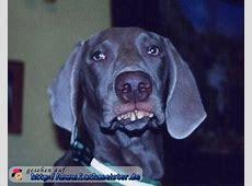Hund braucht Zahnspange
