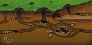 Tiere Unter Der Erde : maulwurfh gellandschaften auch im winterblog gardigo ~ Frokenaadalensverden.com Haus und Dekorationen