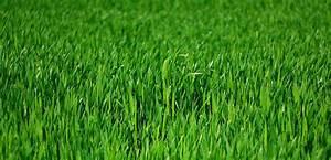 Tondre La Pelouse Sans Ramasser : revitaliser sa pelouse le scarificateur pour un gazon qui respire ~ Melissatoandfro.com Idées de Décoration