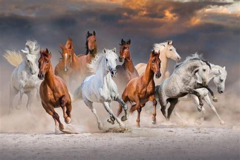 fotos pferden redewendung woher kommt quot dazu bringen mich keine zehn pferde quot