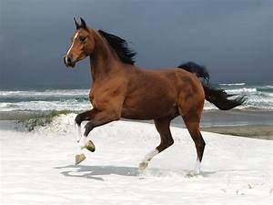 Horse Wallpapers|HD Horses Wallpapers | Beautiful Cool ...