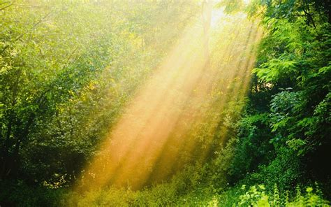 Sunshine Wallpaper Hd Download
