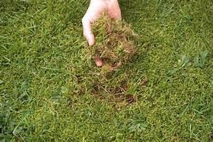 Moos Im Rasen Beseitigen : moos beseitigen so geht s vertikutieren rasenpflege und rasen ~ A.2002-acura-tl-radio.info Haus und Dekorationen