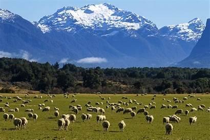 Zealand Nz Population Animals Human Did Facts