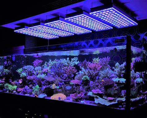 led reef lighting aquarium led lighting photos best reef aquarium led