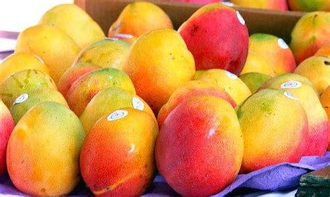 Uaf Scientists Identify 10 Potential Mango Varieties