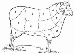 Vintage Clip Art - Sheep Diagram