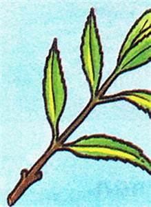Wann Wein Pflanzen : stecklinge von pflanzen schneiden pflegen und bewurzeln ~ Orissabook.com Haus und Dekorationen
