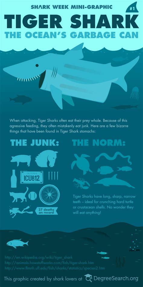 tiger shark  oceans garbage  visually