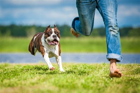 dog breeds  active people