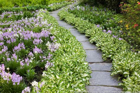best border plants a lovely and low care garden path