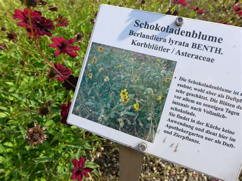 Botanischer Garten Berlin Arzneipflanzen by Lauber S Kolumne G 228 Rten Die Gesund Machen