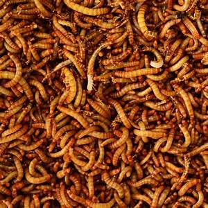 Dried Mealworms  1 And 5 Lb