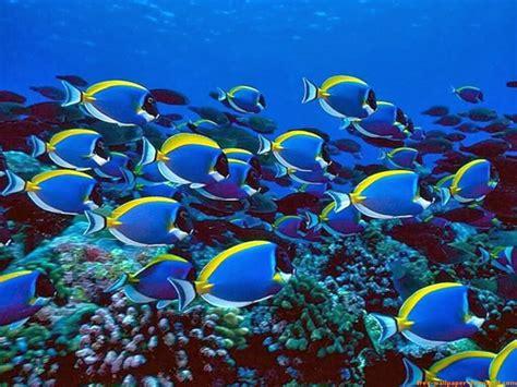 Aquatic Animals Wallpapers - aquatic wallpapers hd wallpapers