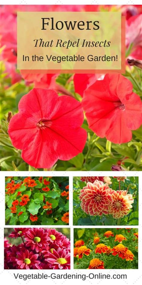 insects vegetable garden and petunias on
