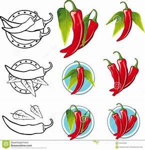 Chili Pepper Illustration