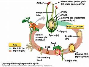 Angiosperm Structure Specialized For Reproduction