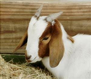 Cute Real Farm Animals | Wallpapers Gallery