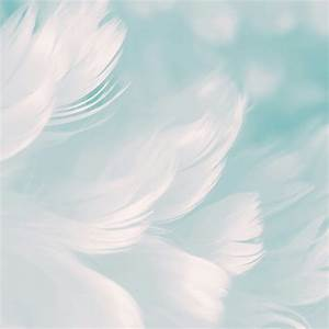 White Feathers Cool Simple Backgrounds Abstract QHD Free ...