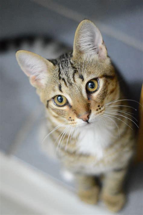 orange tabby cat  macro lens  stock photo