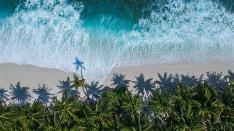 wallpaper  palm trees ocean aerial