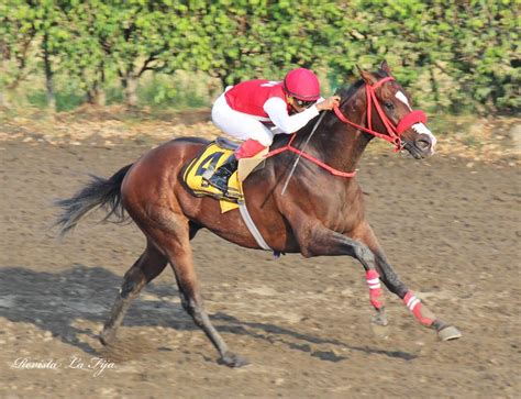 victoria  mimo caballo de alvaro noboa