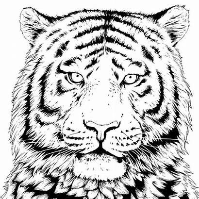 Coloring Wwf Wildlife Fund Science Projects Tiger