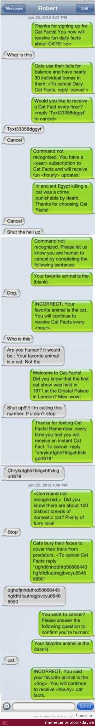 cat facts text prank  dayne meme center