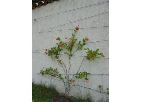 treillis pour plante grimpante kit treillis pour plantes grimpantes tuteurs treillages et claustras