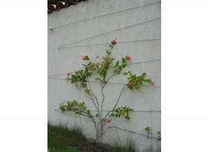 Treillis Pour Plantes Grimpantes : kit treillis pour plantes grimpantes tuteurs treillages ~ Premium-room.com Idées de Décoration