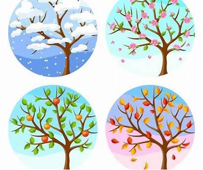 Jahreszeiten Baum Winter Vier Seasons Stagioni Tree