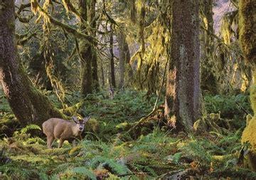 deer forest habitat notecard