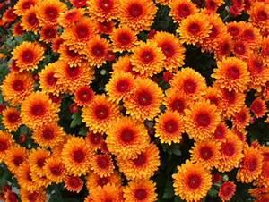 Statiker Kosten Wanddurchbruch : stunning herbstblumen f r balkonkasten pictures ~ Lizthompson.info Haus und Dekorationen