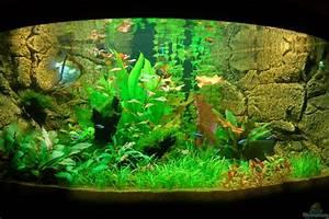 Juwel Trigon 350 : aquarium von sven seibert juwel trigon 350 ~ Frokenaadalensverden.com Haus und Dekorationen