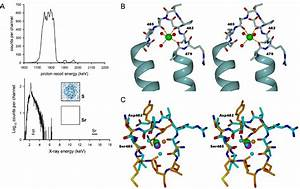 A Previously Unobserved Conformation For The Human Pex5p