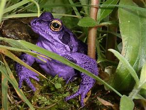 The Purple Frog | Flickr - Photo Sharing!