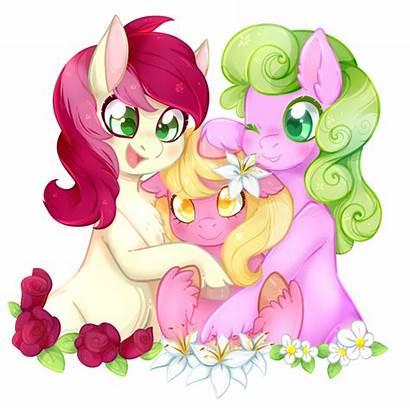 Pony Flower Ponies Mlp Deviantart Flowers Characters