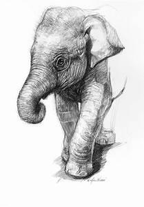 Pencil Drawings Of Baby Elephants Portrait drawings