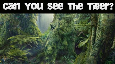 Nobody Can See All The Hidden Animals  #1 (brain Teasers