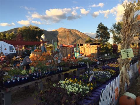 viola s flower garden nurseries gardening 2654 e
