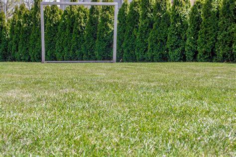 Wann Soll Rasen Vertikutieren by Rasen Vertikutieren Warum Wann Wie Oft Plantura