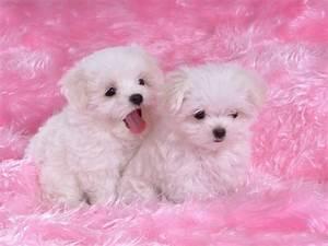 Cute Puppies Wallpaper High Definition #10622 Wallpaper ...